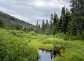 Long Swamp